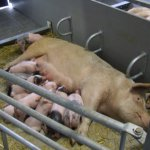 NK_Nijenkamp Stalinrichting biologisch kraamhok (4)