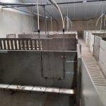 watervoorziening vleesvarkens nippelleiding rvs